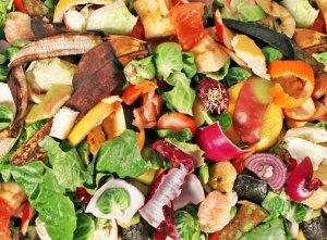 Composting-NYC-889x656