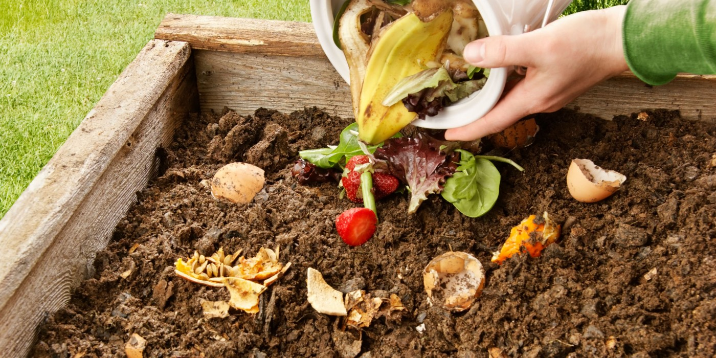 What is compost and why is it important? – Green Dreams