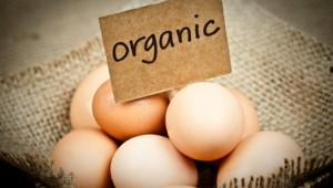 Organic-Eggs-656x372